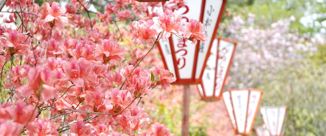 uchiharano-main02