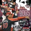 fighting_dogs_2016