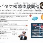 【イベント情報】シイタケ植菌体験