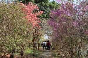 春の散策(安芸市 川竹様)