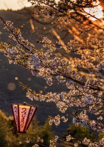 春愁う(安芸市 山﨑様)
