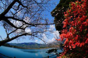 岸辺の春(安芸市 川谷様)
